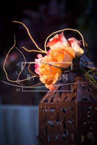 Blush Beauty, Photography, Tom Tracy