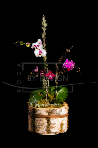 $100 Passion Orchid