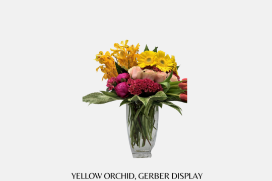 Yellow Orchid Gerber Display